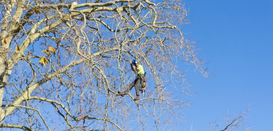 Climber from Emondage Boucherville doing pruning work in Boucherville